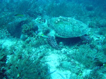 Scuba Caribe,Riu Palace Mexico,Playa del Carmen,Mexiko
