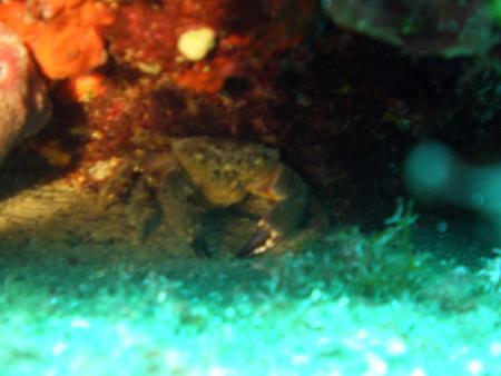 Diving Center Puntizela,Kroatien