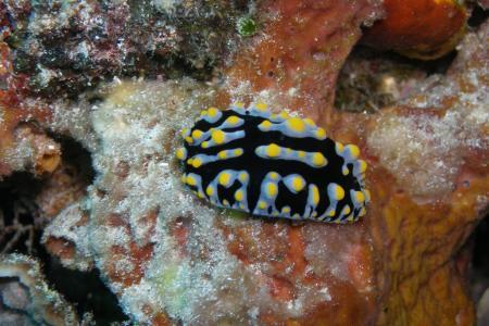 Bunaken Dive Resort,Insel Bunaken,Sulawesi,Indonesien