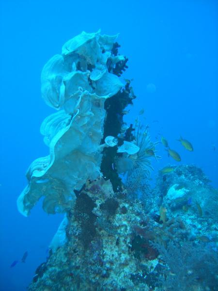 Philippine Islands Divers,Philippinen