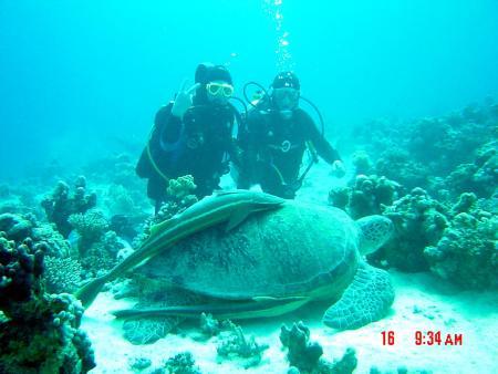 Diving Ocean,Marsa Alam,Marsa Alam und südlich,Ägypten