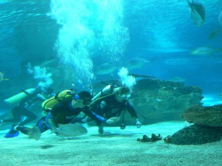 Meeresaquarium Peking und Dalian,China