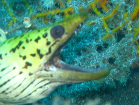 Murex Dive Resort,Manado,Sulawesi,Indonesien