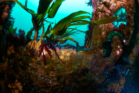 Diving Cellar,Stromness- Scapa Flow,Schottland,Großbritannien