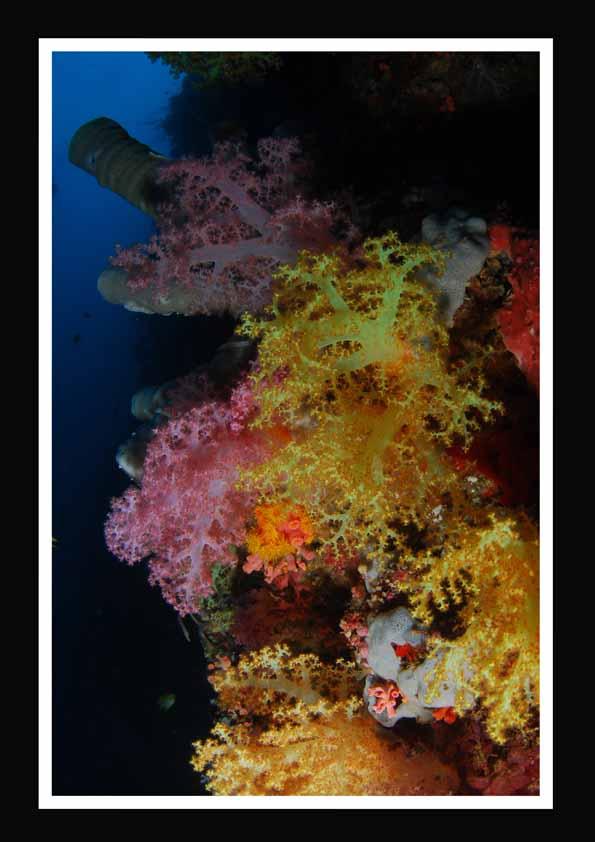 Grandeblue II, Bali Nordküste,Indonesien