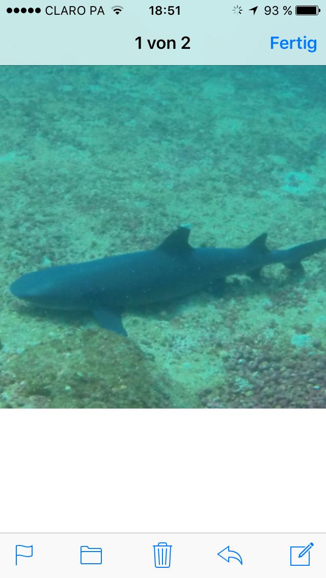 Weißspitzenriffhai, Santa Catalina, Panama