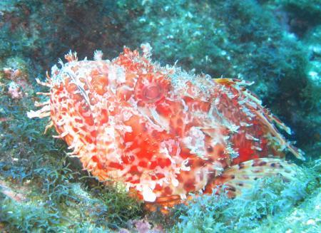 Wahoo-Diving,Santa Maria,Azoren,Portugal
