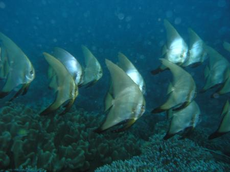 Genesis Divers,Bohol,Philippinen