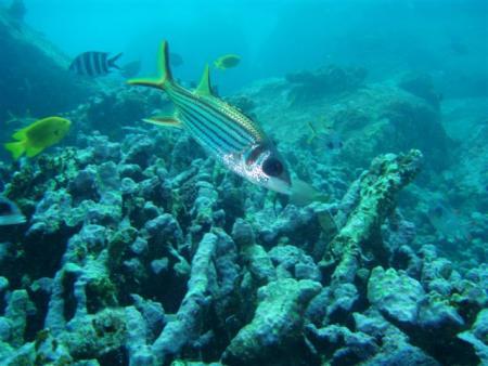 Mahe,Beau Vallon,Coral Garden,Seychellen