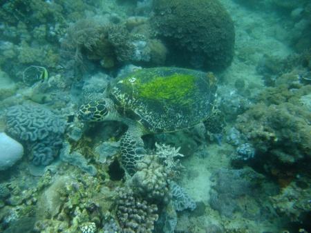 Octopusdivers,Puerto Galera,Philippinen