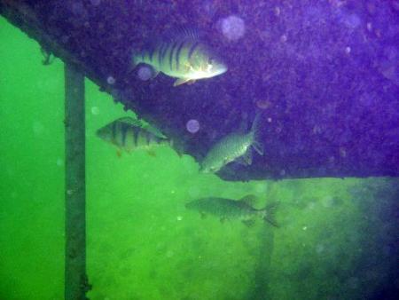 Tauchschule Neptun - K & K Dive,Gmunden,Österreich