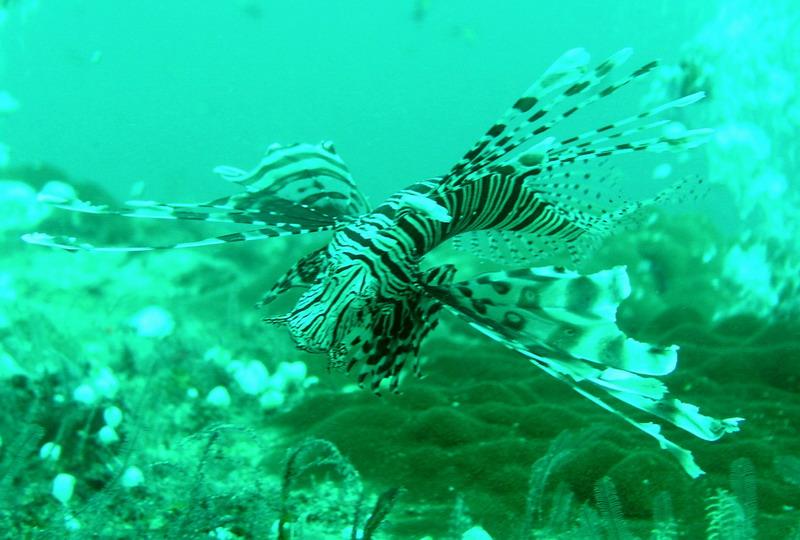 Ellaidhoo, Ellaidhoo,Ari-Atoll,Malediven