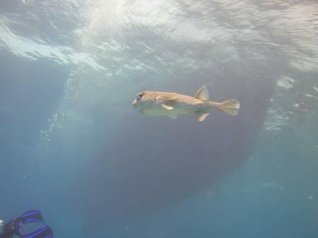 Freedom Diver,Safaga,Ägypten