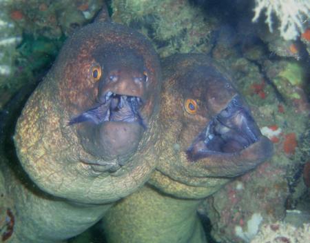 Ocean Dream Divers,Beau Vallon,Mahé,Seychellen