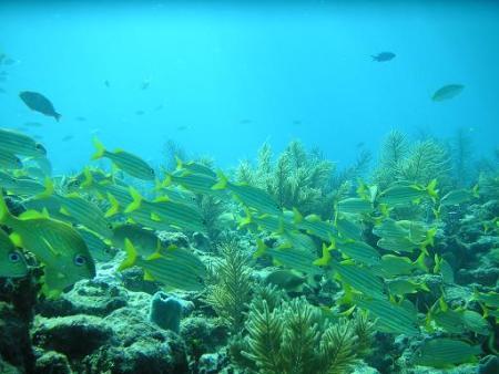 Conch Republic Divers,Tavernier,Florida,USA