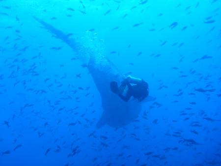 Galapagos Nortada,Galapagos,Ecuador