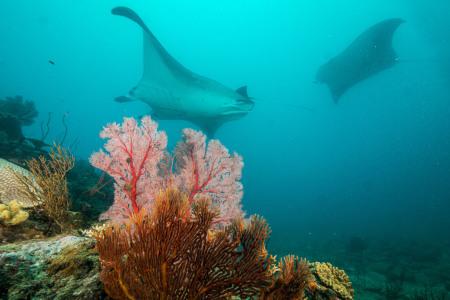 Kuendu Dive Safari,Touho,Neukaledonien