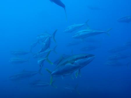 Dive HQ,Tauranga,White Island,Neuseeland