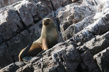 Playa Mendieta,Paracas - Seelöweninsel,Peru