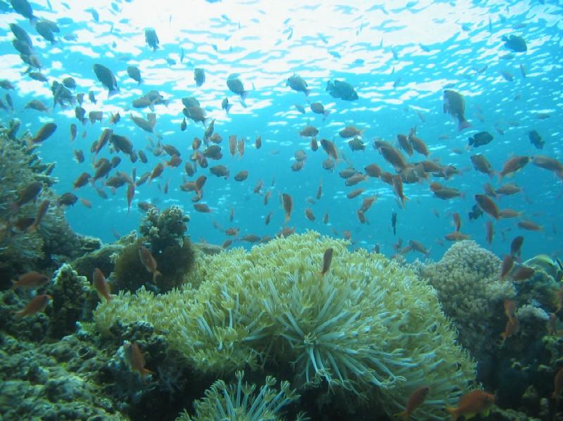 Insel Mindoro, Mindoro,Philippinen