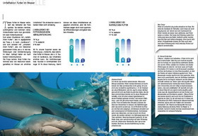 "Sharkproject Buch ""Blind Dates"""