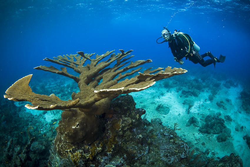Sabas Unterwasserwelt, Saba,Niederländische Antillen