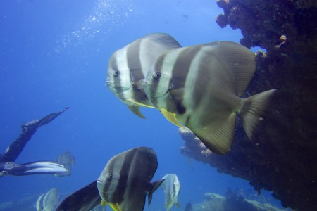 Joy Dive,Safari Island (ex Mushimasgali,Dhoni Mighili),Malediven