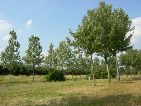 De grote Hegge / Thorn,Niederlande,Thorn