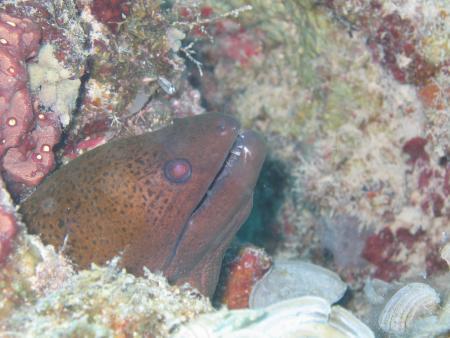 Club Paradise,Palawan,APO Reef.,Philippinen