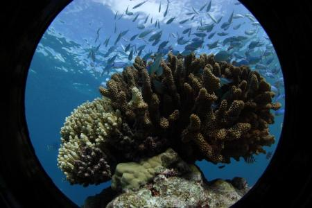 Diving Centers Werner Lau / Extra Divers Fakarava,Französisch-Polynesien