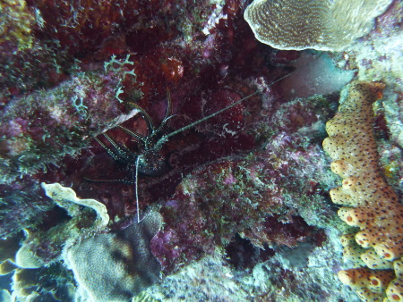 Relaxed Guided Dives,Curaçao,Niederländische Antillen