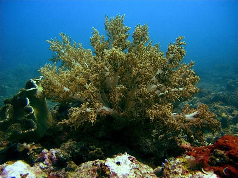 Tauchen mit Dirk, Palawan/Honda Bay,Philippinen
