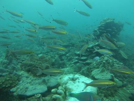 East Marine Diving,Pulau Payar,Pulau Langkawi,Malaysia