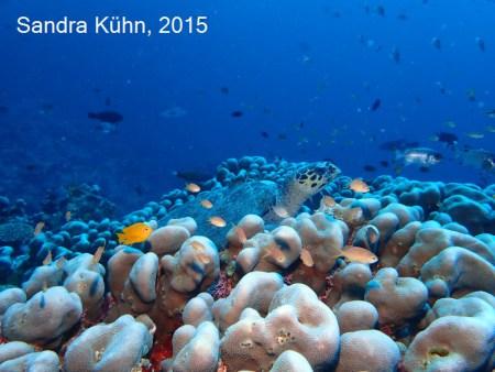 Raja Ampat Papua Explorers Resort,Allgemein,Indonesien