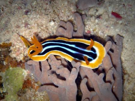 M/Y Golden Dolphin,Ägypten