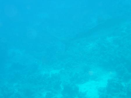 Carless Reef (Hurghada),Ägypten