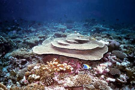 Wrack der British Loyality,Addho Atoll,Malediven