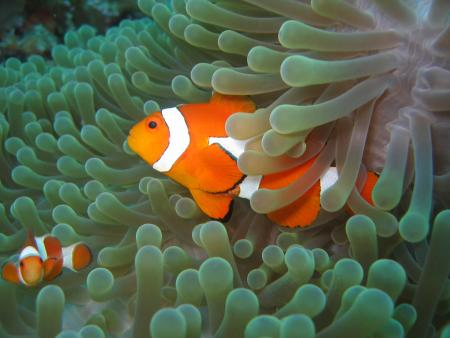 Selayar Dive Resort,Sulawesi,Indonesien