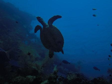Fun Divers,Amed,Bali,Indonesien