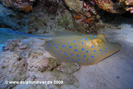 M/Y Ghazala 1,Extra Divers,Ras Nasrani,Melia Sinai Paradise Resort,Sharm El Sheikh,Sinai-Süd bis Nabq,Ägypten