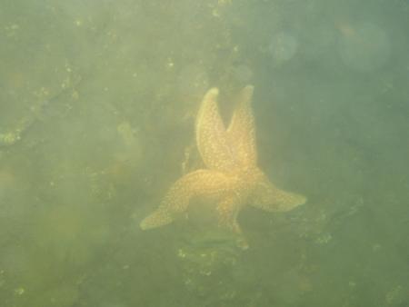 Scharendijke,Grevelinger Meer,Niederlande