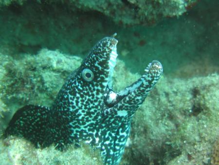 Narcosis Dive Charters,Riviera Beach,FL,Florida,USA