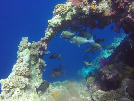 Carp Island Resort,Palau