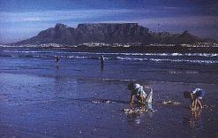 Orca Industries,Claremont,Südafrika