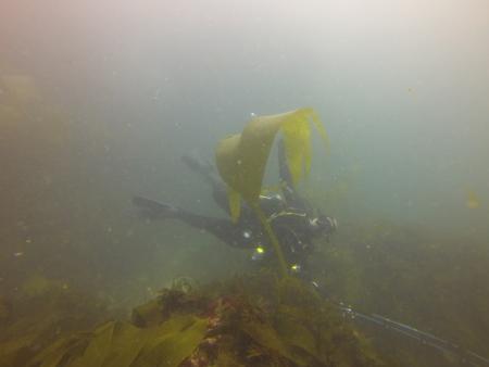 Blue Ocean Divers,Lagos,Portugal