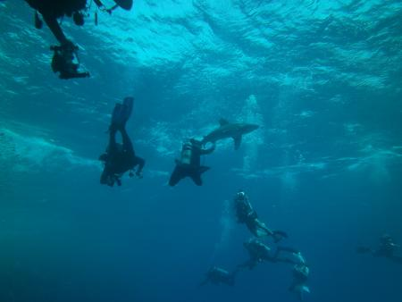 Elphinstone Reef (Marsa Alam),Ägypten