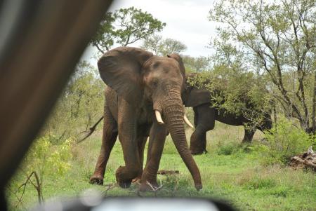 Scuba Native Tauchreisen,Mosambik