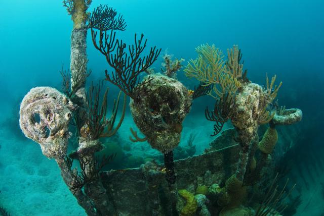 Wrack North Carolina Bermuda, The North Carolina 1880 - English Iron Barque, Bermuda