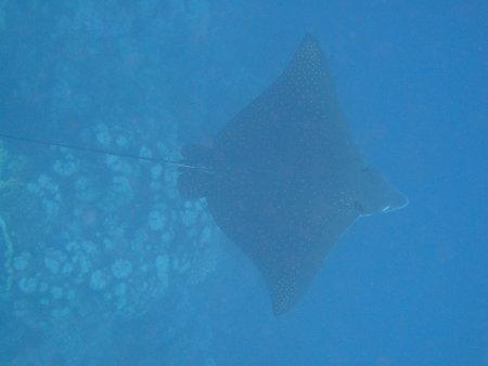 Sea World Diving Center,Marsa Alam,Marsa Alam und südlich,Ägypten