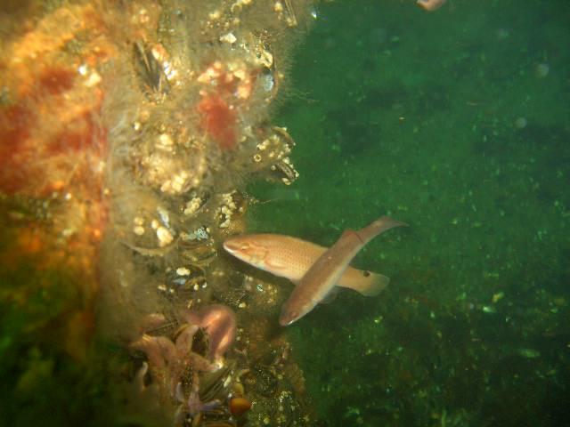 Tauchbasis Atlantis Rerick, Rerik,Mecklenburg-Vorpommern,Deutschland